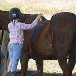 Zdjęcie Ports Horse Farm