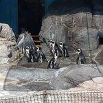 企鵝餵食活動