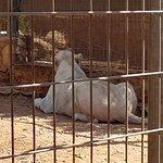 Pafos Zoo ภาพถ่าย