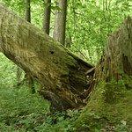 ทัวร์ธรรมชาติและสัตว์ป่า