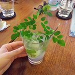 Marum leaf, used in some dishes. I popped it in my lime syrup soda for a quick Instagram.