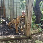 Foto de Luray Zoo - A Rescue Zoo