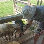 Foto de Luray Zoo - A Rescue Zoo