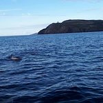 Common dolphins off Calf of Man 2