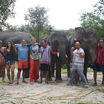 Elephants At Home Foto