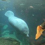 Photo of Dallas World Aquarium