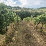 Foto van Tuscan Wine Tour by Italy and Wine