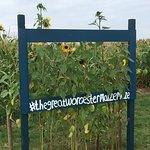 Φωτογραφία: The Great Maize Maze