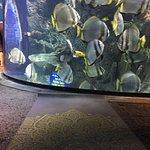 Foto van Downtown Aquarium