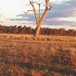Φωτογραφία: Winton Wetlands