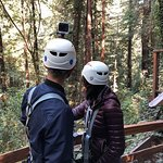 Looking at the redwood forest