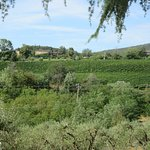 Vineyard views from property