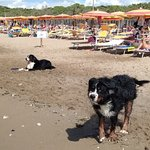 Dog Beach Image