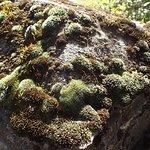 Moss on a stone fence