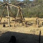 Chimp playground