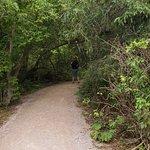 Trail towards Spearfish Falls