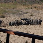 Elephants lumbering by as seen from hotel deck