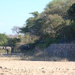 Viewing elephants and lodge while on drive