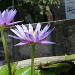 Linh Ung Pagoda Foto