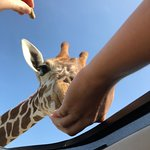 hand feeding from the sunroof