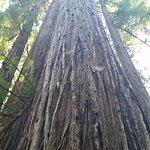 Zdjęcie Jedediah Smith Redwoods State Park