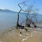 Foto de Praia da Daniela