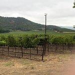 Foto van Quixote Winery