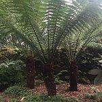 Tree palms?