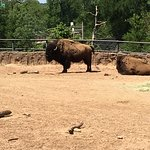 Bild från Cameron Park Zoo