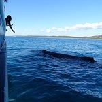 Foto van Tasman Venture - Day Tours
