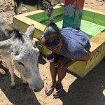 Photo of Donkey Sanctuary Aruba