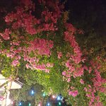 Çiçek Restaurant resmi