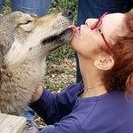 Colorado Wolf Adventures Photo