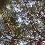 Parc Central Mataro照片