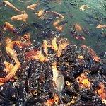 ภาพถ่ายของ Fishing Flower Park