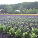 Photo of Farm Tomita