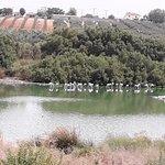 Foto Laguna de Fuente Piedra