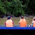 Kinabatangan River의 사진