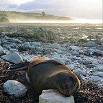 Photo of Peninsula Seal Colony