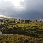 Photo of Icelandic HorseWorld