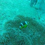 صورة فوتوغرافية لـ Octopus Diving Center