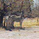 Foto de Moremi Wildlife Reserve