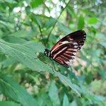 Bild från Butterfly Park of Benalmadena