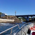 Foto Whale Research EcoExcursions