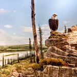 Eagle and wolf featured in a diorama