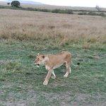 Mwema Africa Safaris照片