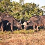 Lalibela Game Reserve Photo