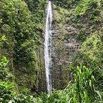 Pipiwai trail is gorgeous.