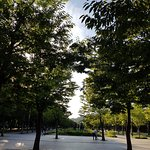 Photo of Seoul Forest