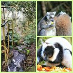 Photo of Monkeyland Primate Sanctuary